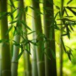 Servilletas Bambou-82871